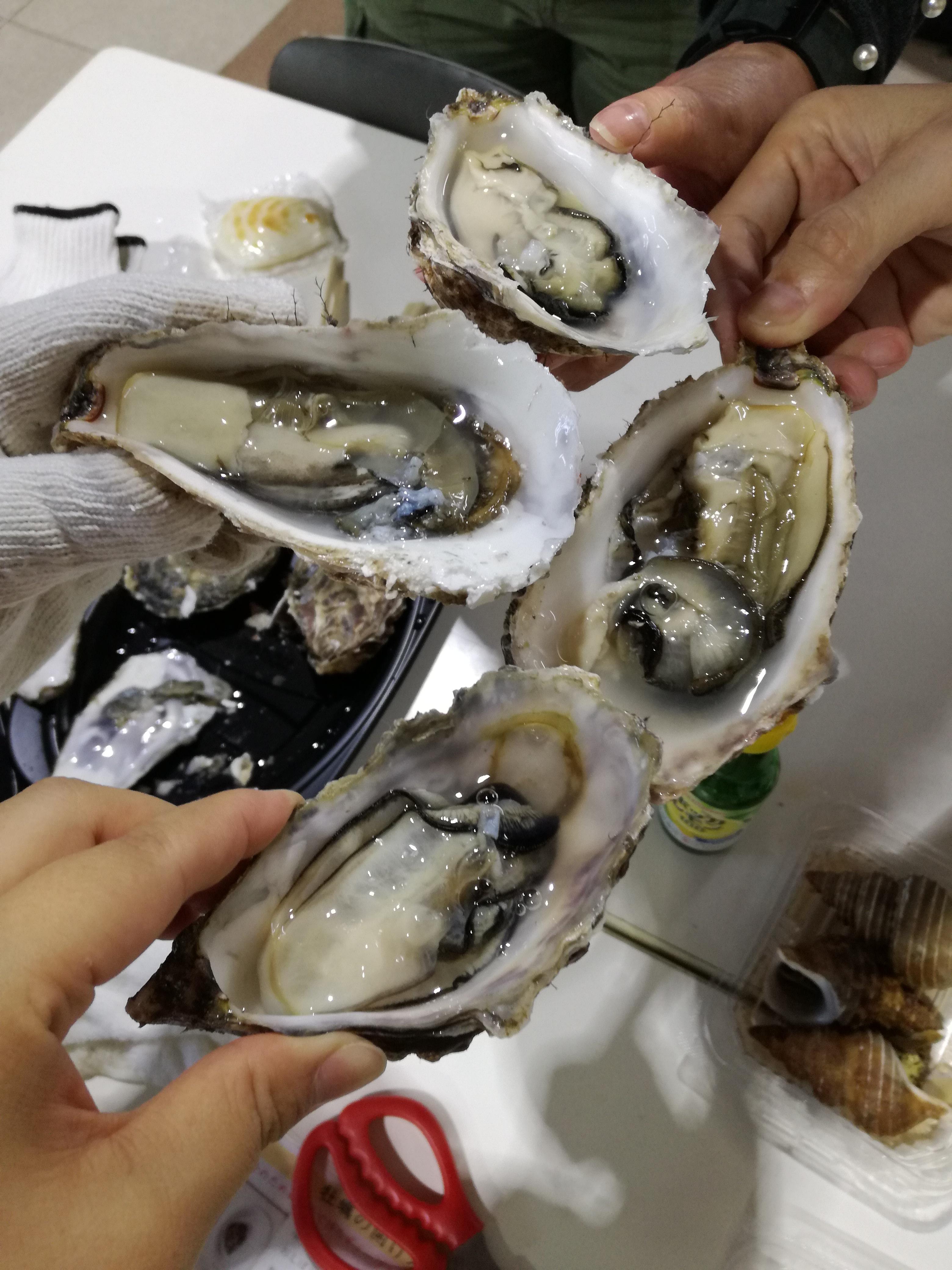 生牡蠣 厚岸
