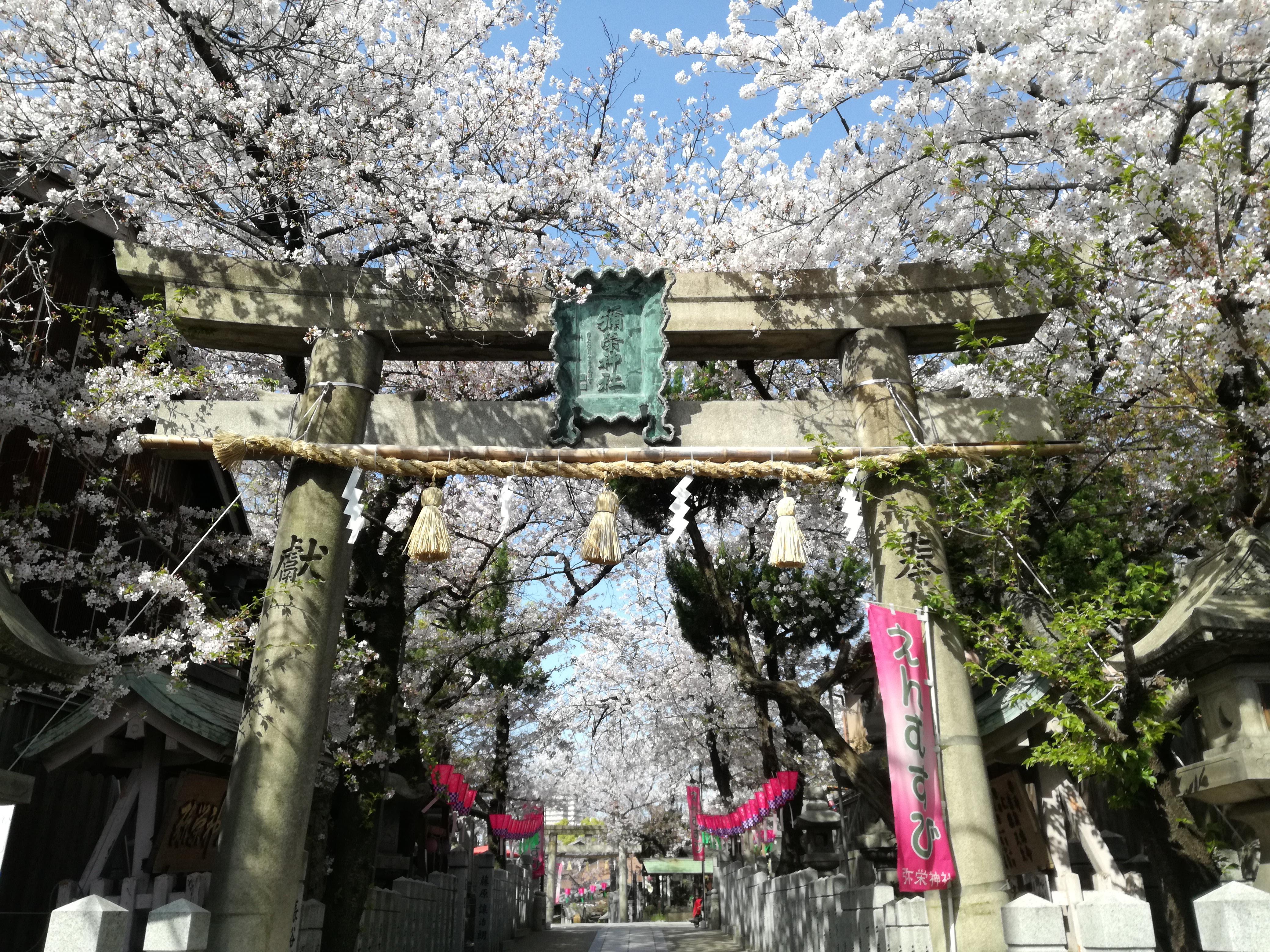 生野区 弥栄神社 桜
